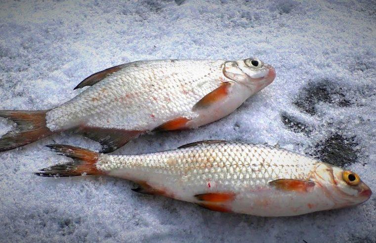 Рыбалка для души. Зимняя простая рыбалка. Ловля на мормышку окуня и густеру. Жерлицы.