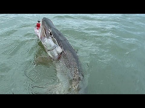 ДЕСЯТКА….ДА НАФИК БОЛЬШЕ!!!!Раздача КРОКОДИЛОВ!!!! Рыбалка на поролон в корягах!!!
