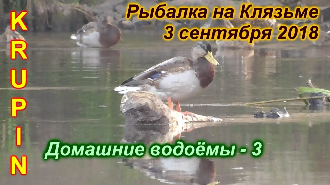 Рыбалка на Клязьме.  3 сентября 2018