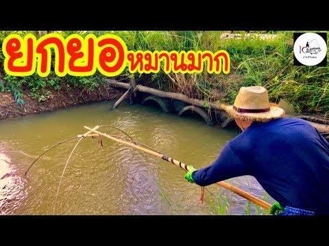 ยกยอ ปลาพุ่งสะดุ้งเต็มยอ Fishing lifestyle Ep.142