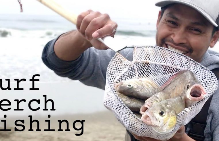 Perfect Swell, Tide and Wind condition for Surf Perch Fishing