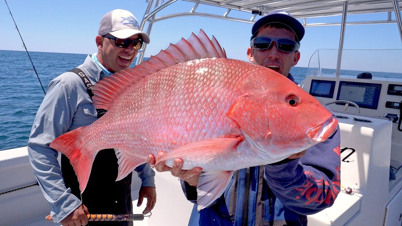 Searching for Giant Cobia and Monster Snapper Fishing, Catch N Cook — 4K