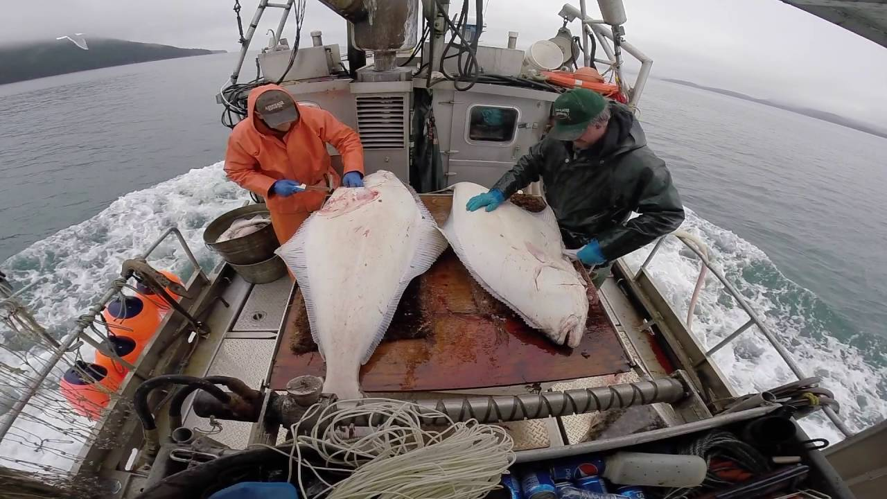 Sustainable Southeast Alaska Commercial Halibut Fishing