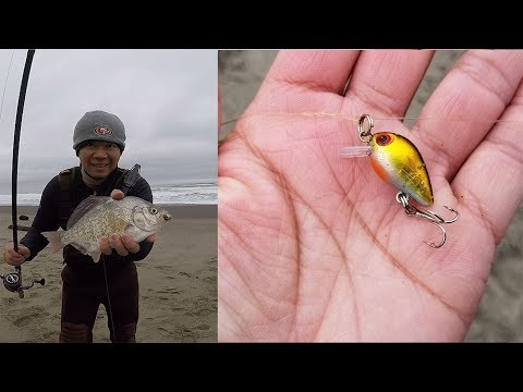 Surf Fishing with a Tiny Crankbait