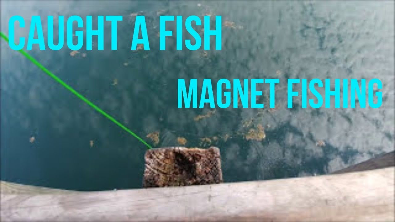I Caught a Fish Magnet Fishing!