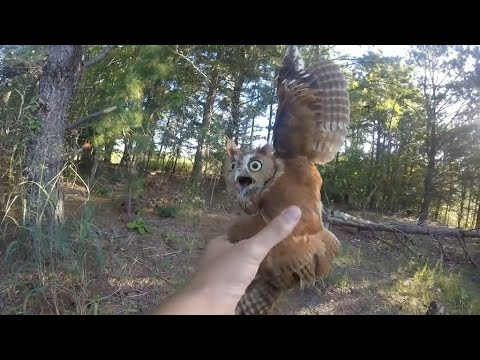 Rescuing a screech owl tangled in fishing line, New Jersey — 09/06/2015
