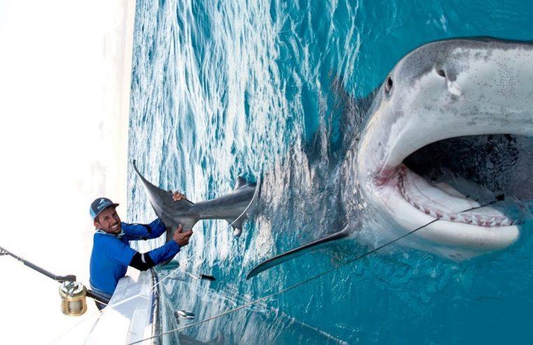 Massive 1000lb Tiger Shark caught while Bottom Fishing in the Bahamas — 4K