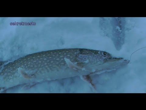 Удачная зимняя рыбалка на щуку  Жерлицы рулят. Successful winter fishing for pike