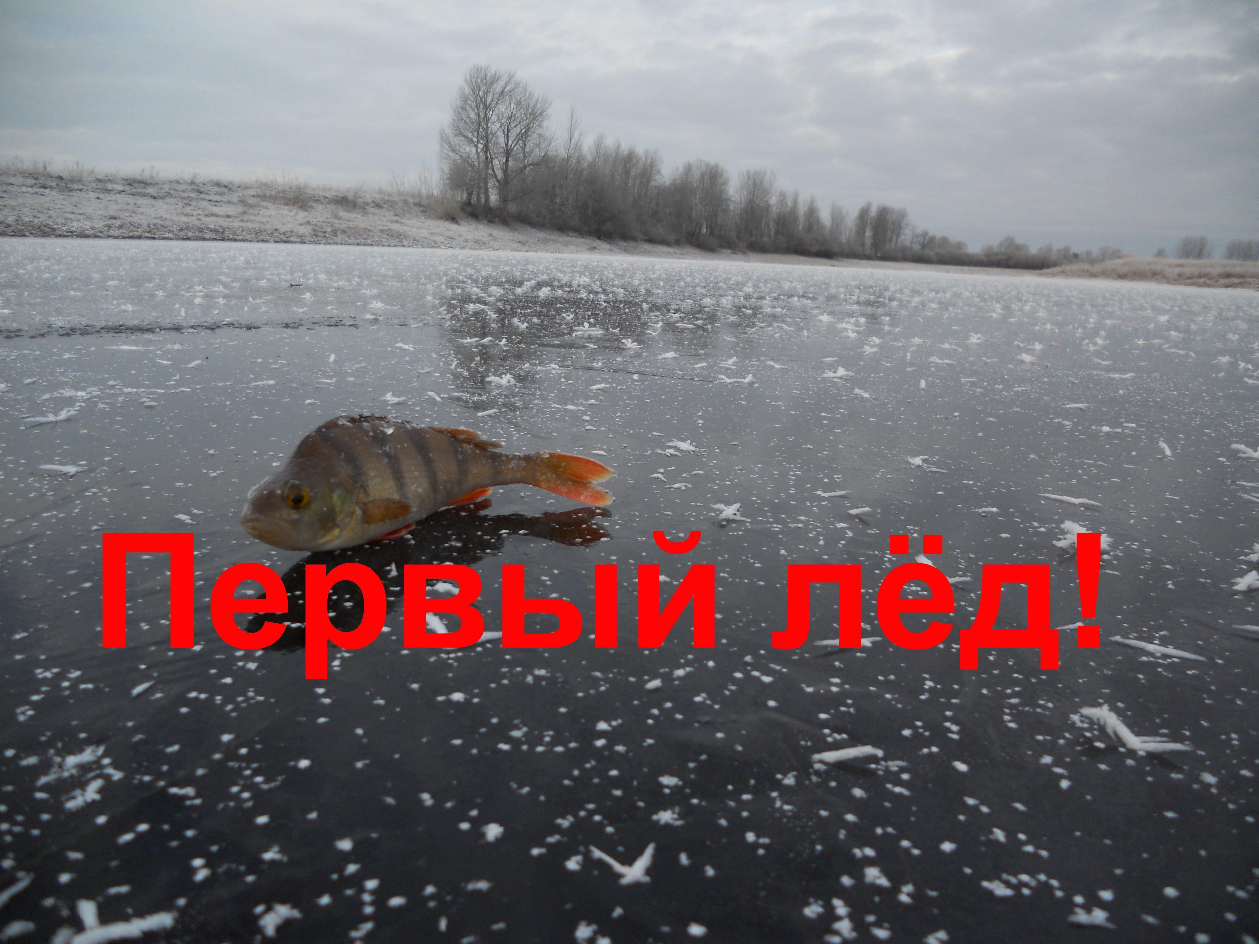 Зимняя рыбалка, первый лёд. Окунь на мормышку.