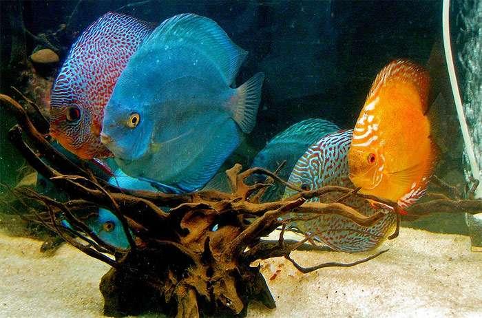 Кормление вашей аквариумной рыбы Природные живые продукты