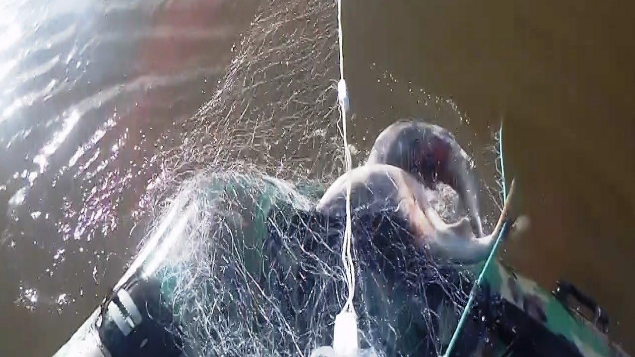 Рыбалка сплавной сетью,  Лов Кеты на Амуре 2018