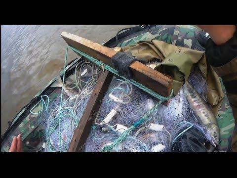 Рыбалка сетями, Лицензионный лов кеты на Амуре