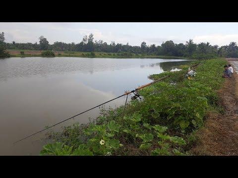 CÂU CÁ TRA HẦM HOANG KẾT QUẢ BỂ ĐẦU   HUYNH KHOA FISHING
