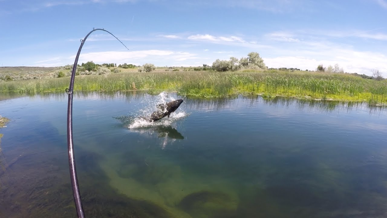 Sight Fishing for Monster Sturgeon in a tiny Creek! — Pt 2