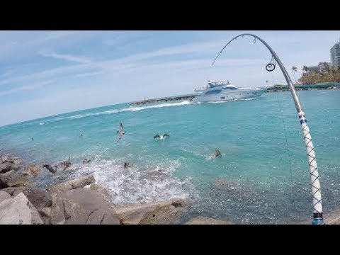Florida Mullet Blitz — Fishing a QUESTIONABLE Spot for Insane Action