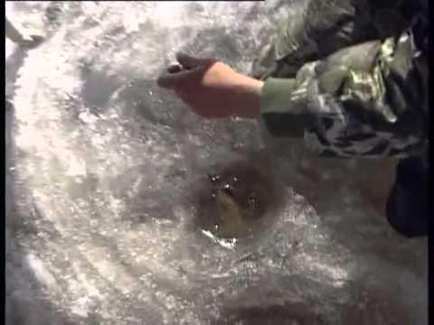 Щука на живца зимняя рыбалка