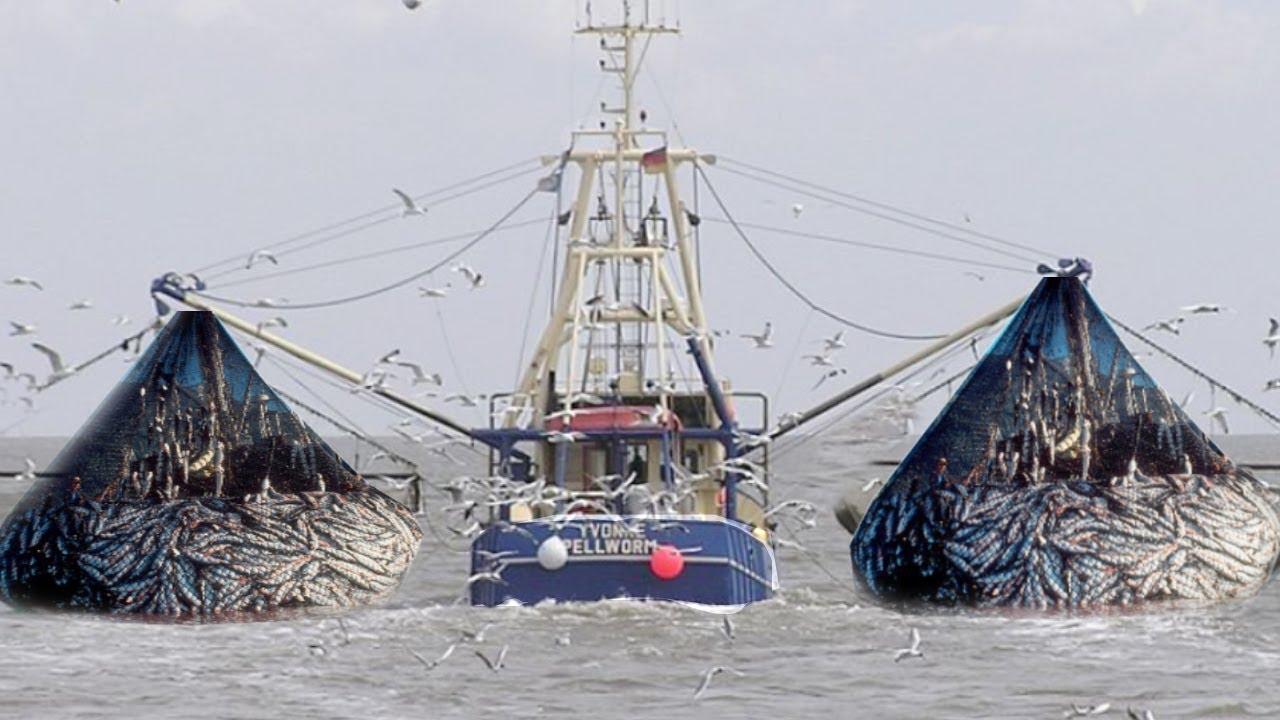 Fishing Boat Trawler Two Fishermen a Big Catch