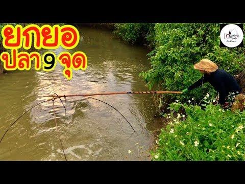 ยกยอ ปลากรายเข้าอย่างงาม Fishing lifestyle Ep.148