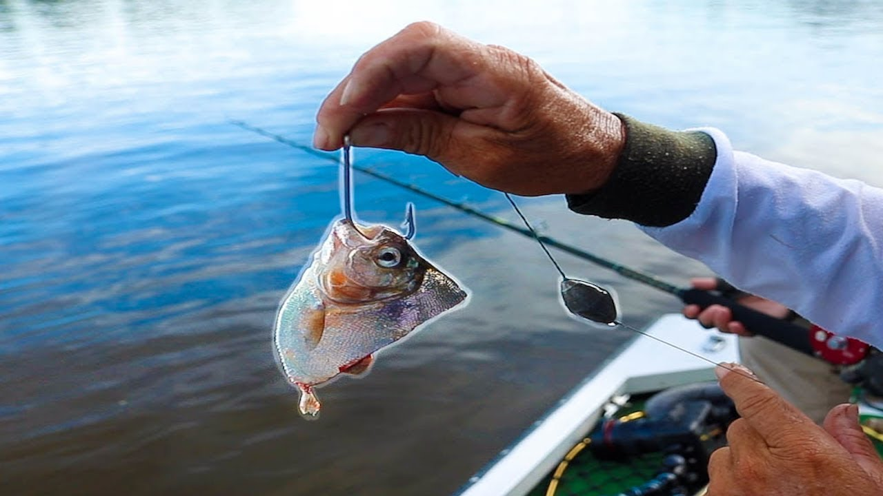 Using LIVE Piranha as Bait — Fishing the Amazon River!