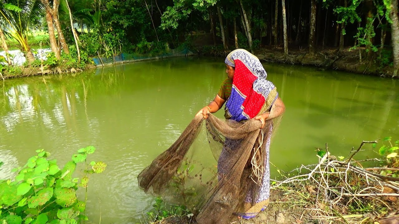 Net Fishing   Catching Fish With A Cast Net   net fishing in village (Part-15)