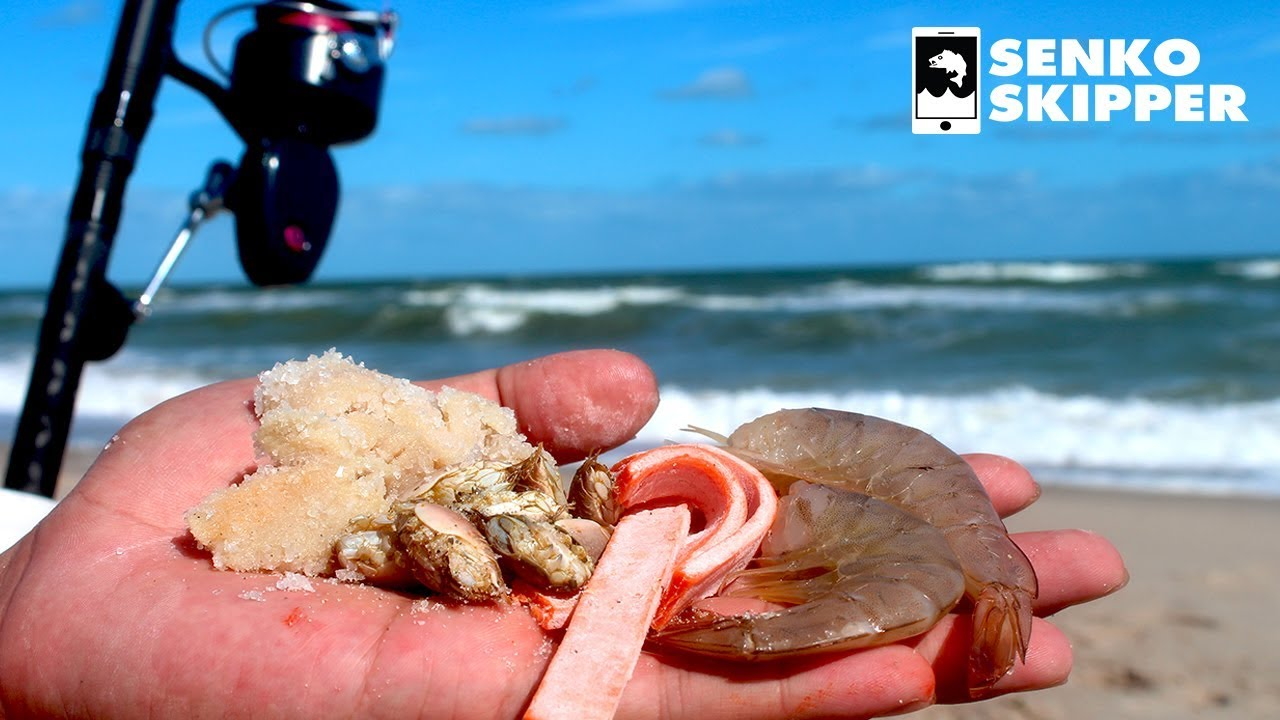 Beach Fishing: The Best Baits to Catch Fish at ANY Beach!