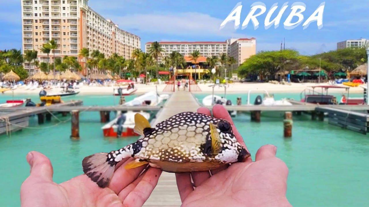 Dock Fishing for Tropical Species — Aruba Pt. 1