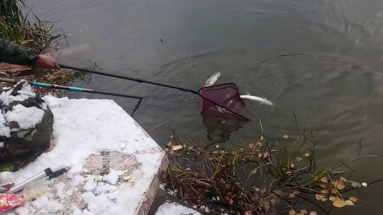 Две форели на одну удочку, это рыбалка у Бородина 👍