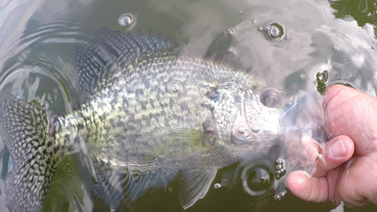 Crappie Fishing With A Jig and Bobber