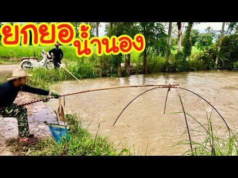 ยกยอ ปลาตื่นน้ำใหม่ Fishing lifestyle Ep.150