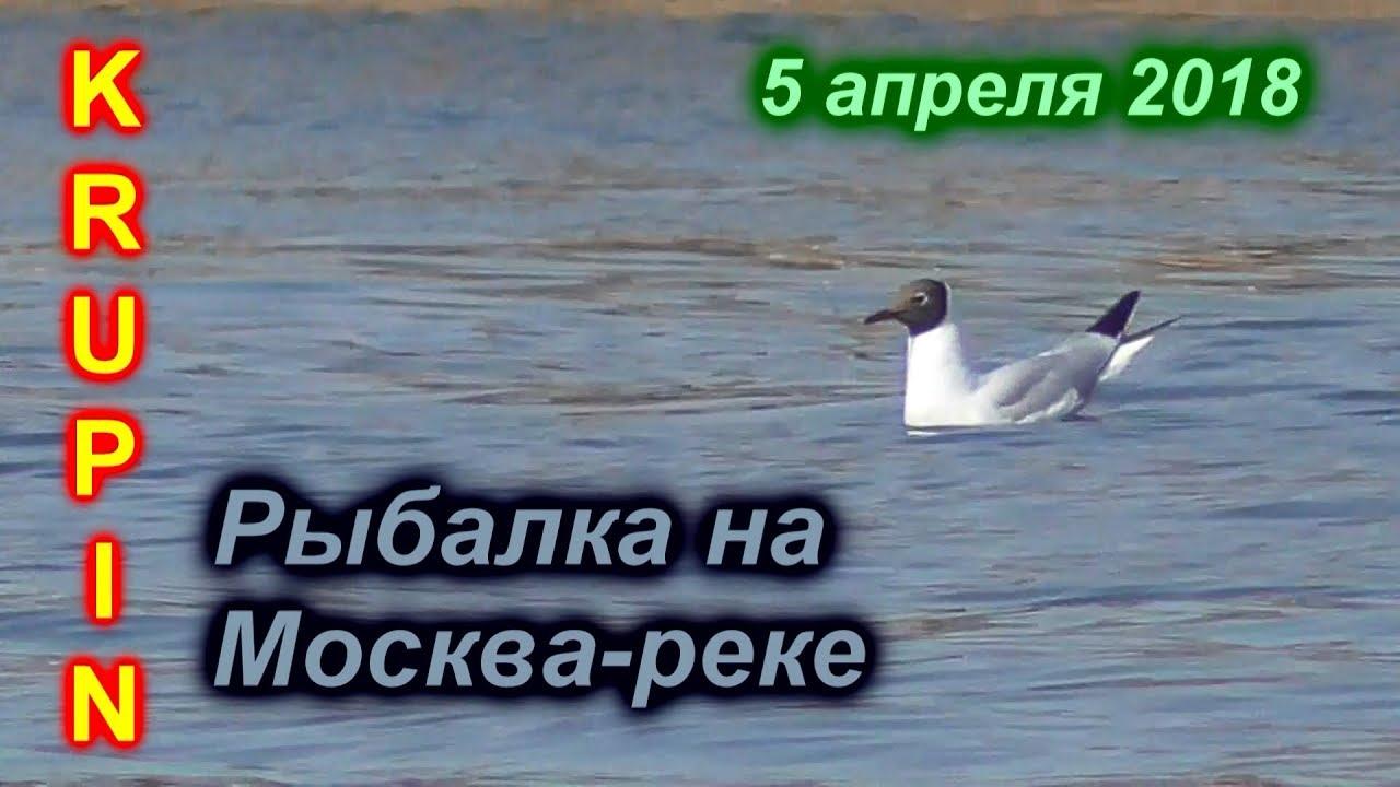 Рыбалка на Москва-реке. Первая за три месяца. СОСКУЧИЛСЯ…..
