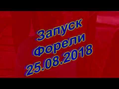 Запуск Форели У Бородина-25 08 2018