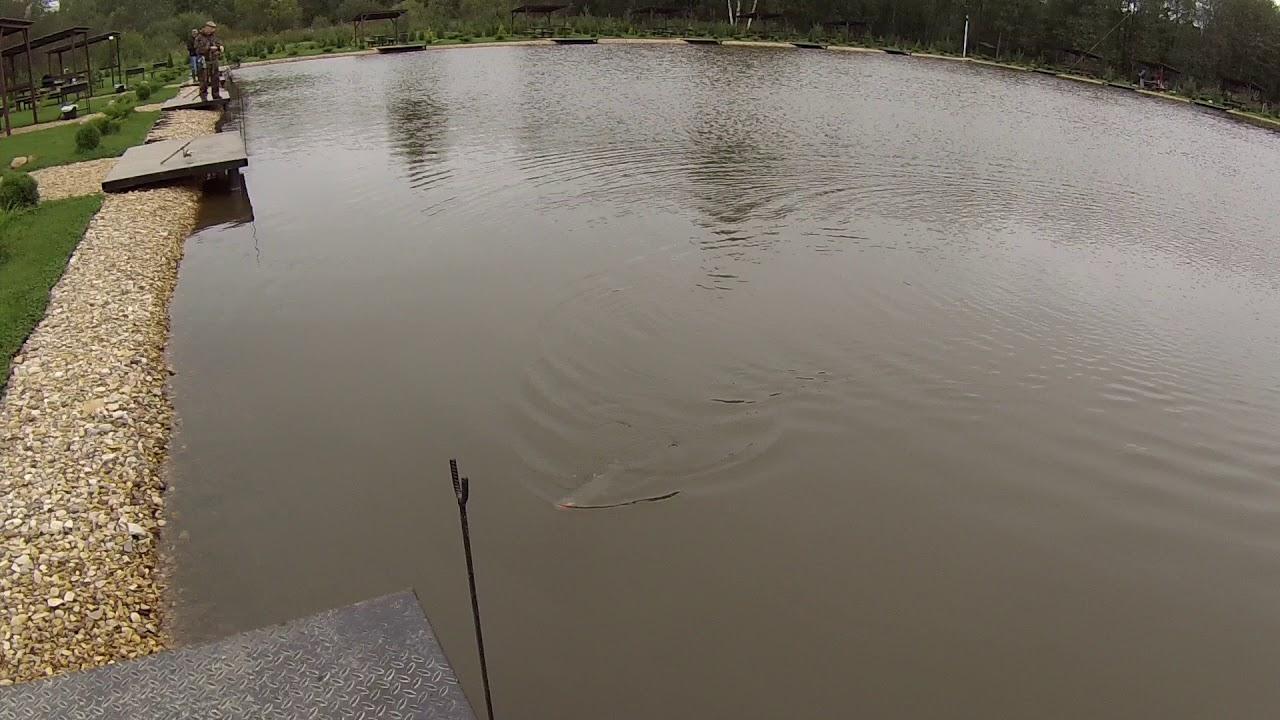 Платные пруды. Рыбалка в Подмосковье.