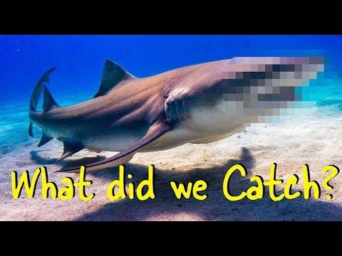 Extreme Beach Shark Fishing — Destin Florida