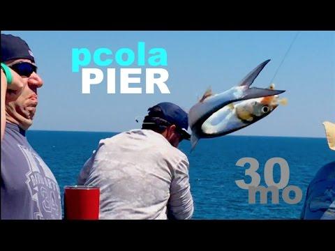Fishing Massive Bait Schools — Pensacola Pier Florida