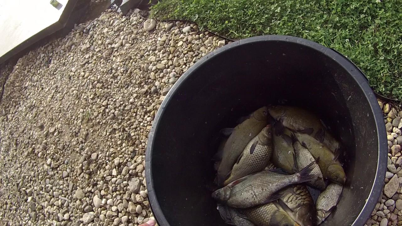 Ловля линя на платной рыбалке в Дмитровском районе. Платный пруд в Подмосковье.