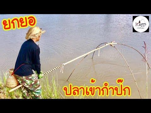ยกยอ ปลาเข้าเป็นฝูง Fishing lifestyle Ep.151
