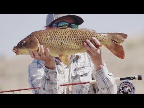 Carpoon — Carp Fly Fishing — Sage Fly Fishing
