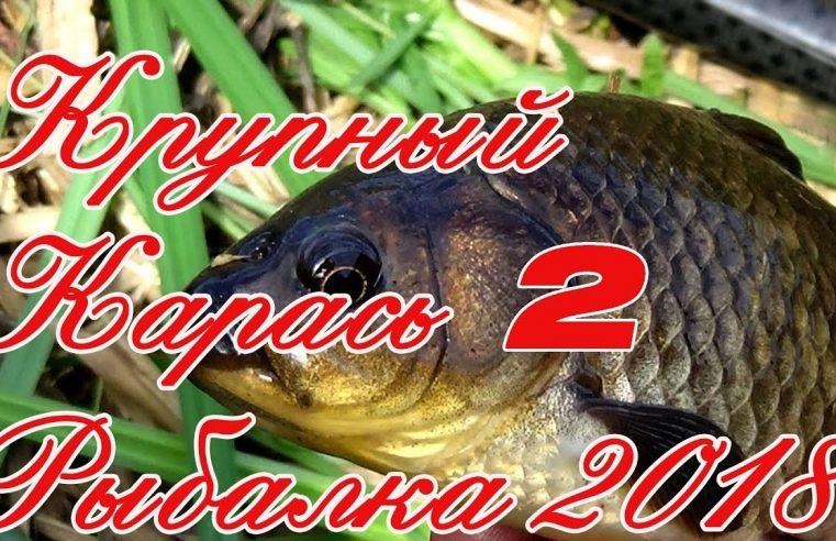 Крупный Карась 2. Рыбалка на Карася в Августе 2018