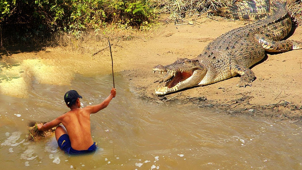 Terrifying! Brave Boy Catches Crocodile While Fishing — How To Catch Crocodile in Cambodia
