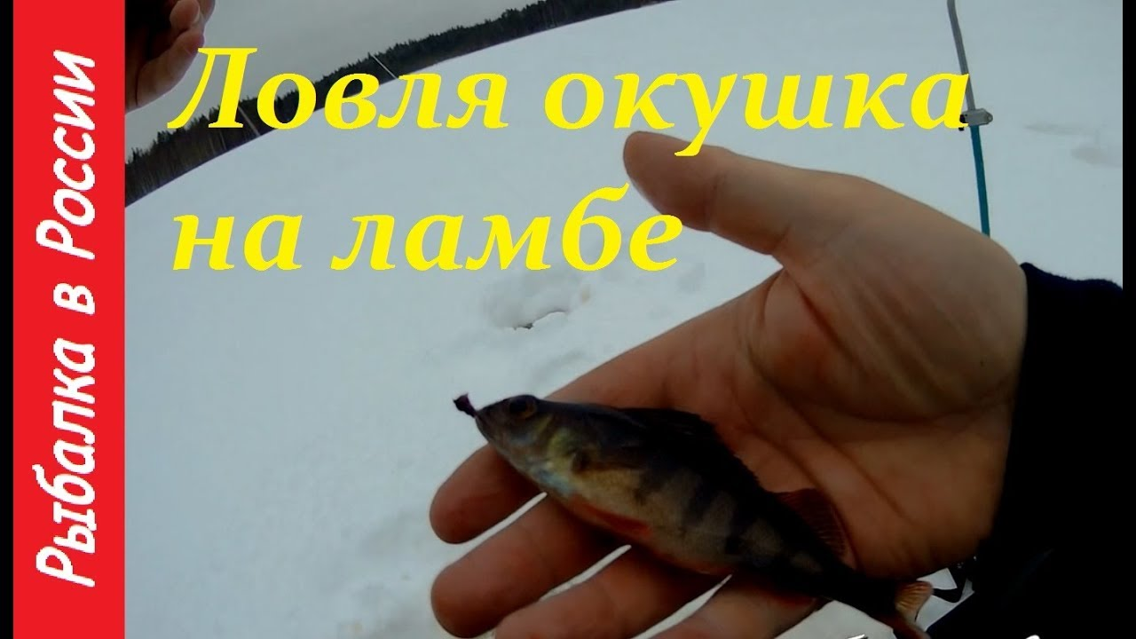 Рыбалка в Карелии март 2018  Ловля живца на ламбе