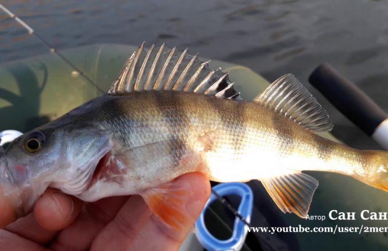 Рыбалка на Андреевском озере в Тюмени, Akkoi ловит окуней с берега и с лодки