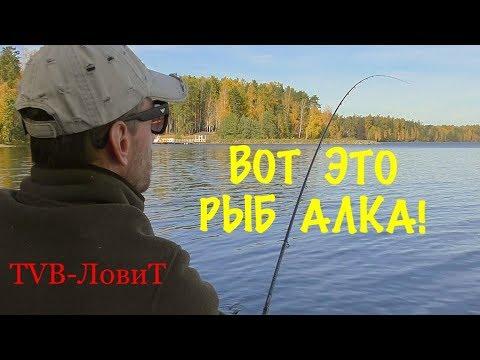 Плотвиный Жор! Рыбалка на фидер осенью, Ловля плотвы на озере?