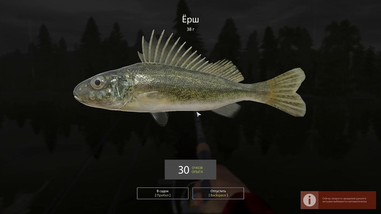 Русская рыбалка 4 — озеро Старый Острог — Густера и ёрш