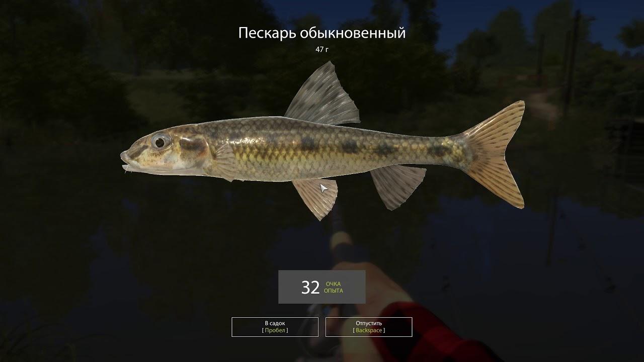 Русская рыбалка 4 — река Вьюнок — Пескарь и елец у мостика
