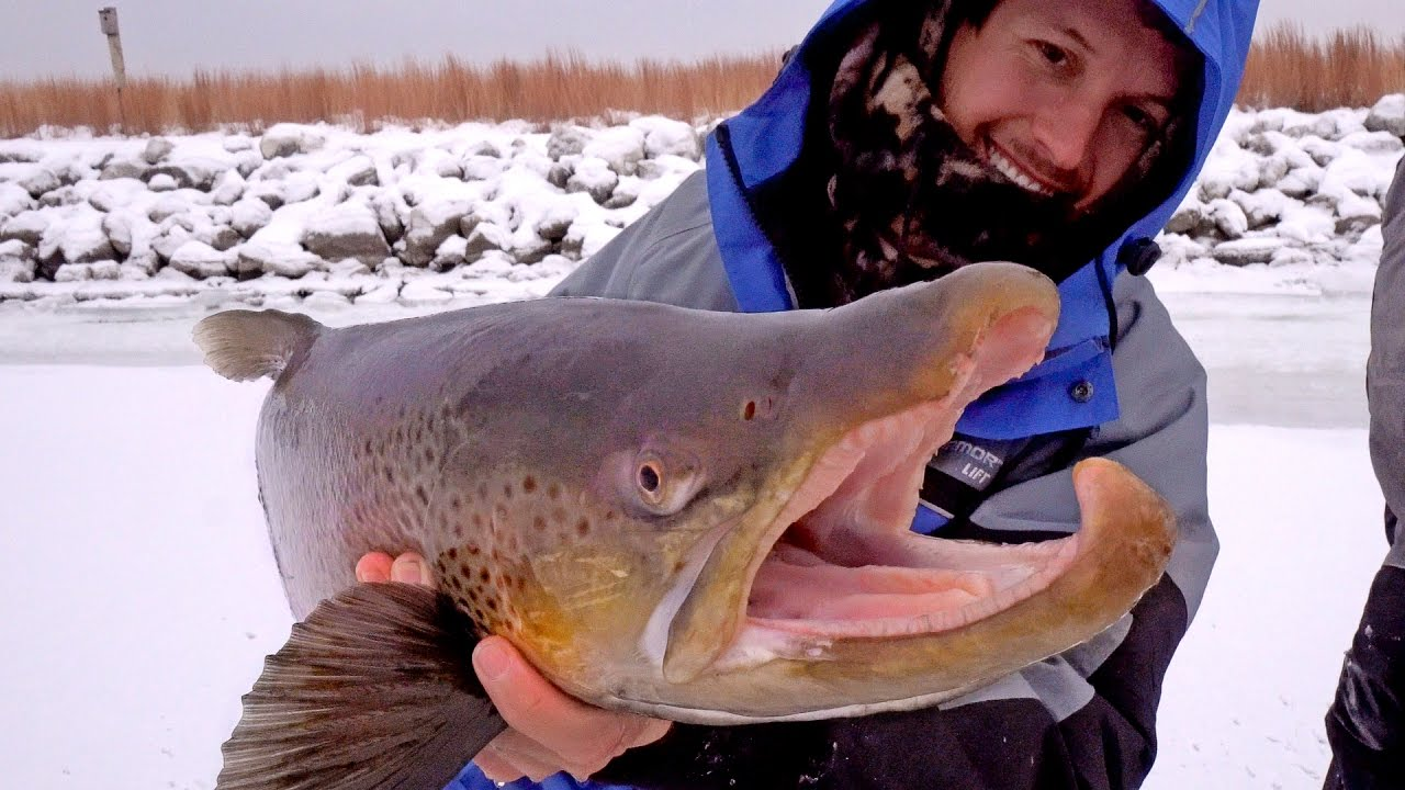 Ice Fishing for Giant Brown Trout — ft. Eric Haataja — 4K