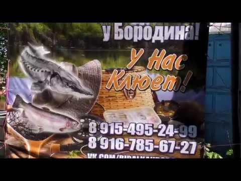 Рыбалка у Бородина Подготовка к Запуску Линя 4K