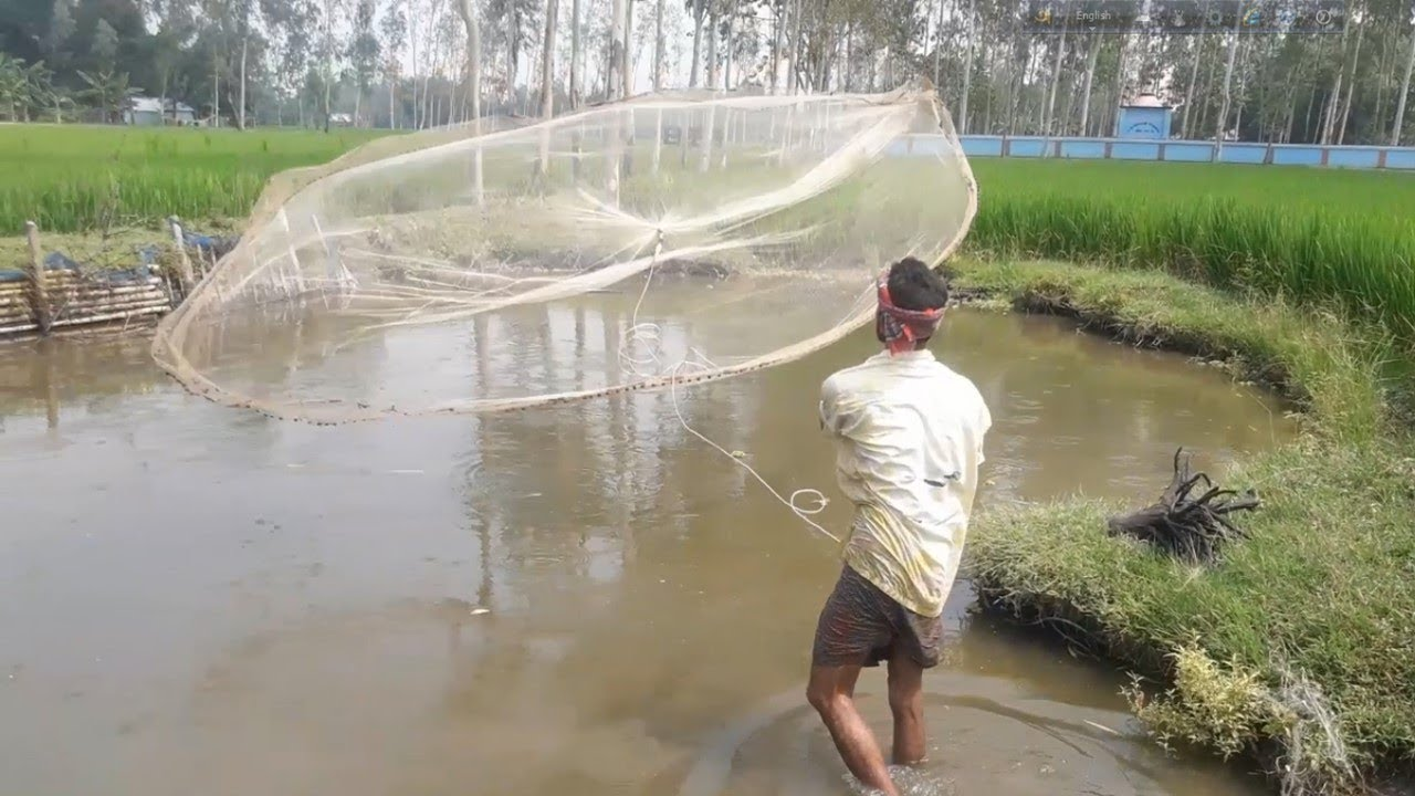 Net Fishing | Catching Fish using Cast net | Cast Net Fishing in a Pond (Part-13)