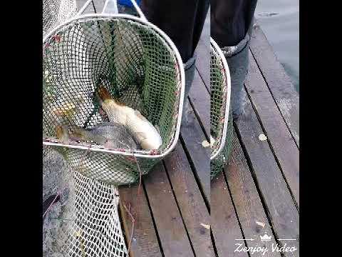 Рыбалка у Бородина город Видное…