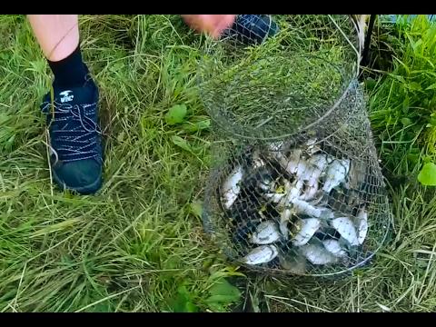 Рыбалка в Новосибирске на карасёвом озере 6-7.08.2016г.
