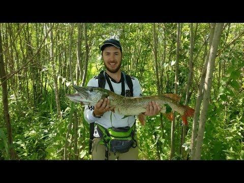 Жор щуки в Новосибирске летом. Упустил щуку на 2 кг, поймал трофей на 4,95. Ловля щуки.
